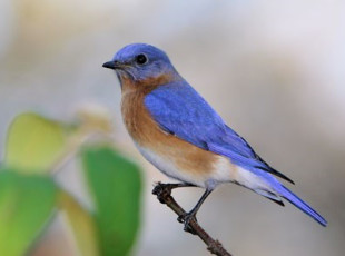 See the Bluebird Boxes