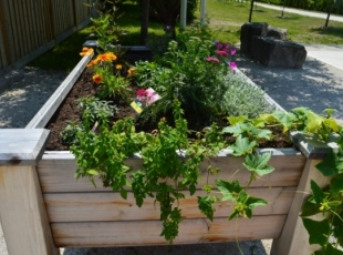 Port Elgin Raised Bed